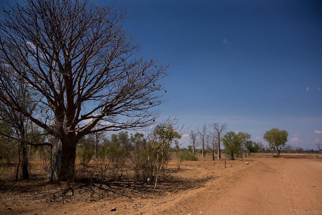 141103-marc-wiese-DSC3375-2014-Australien-Urlaub.jpg