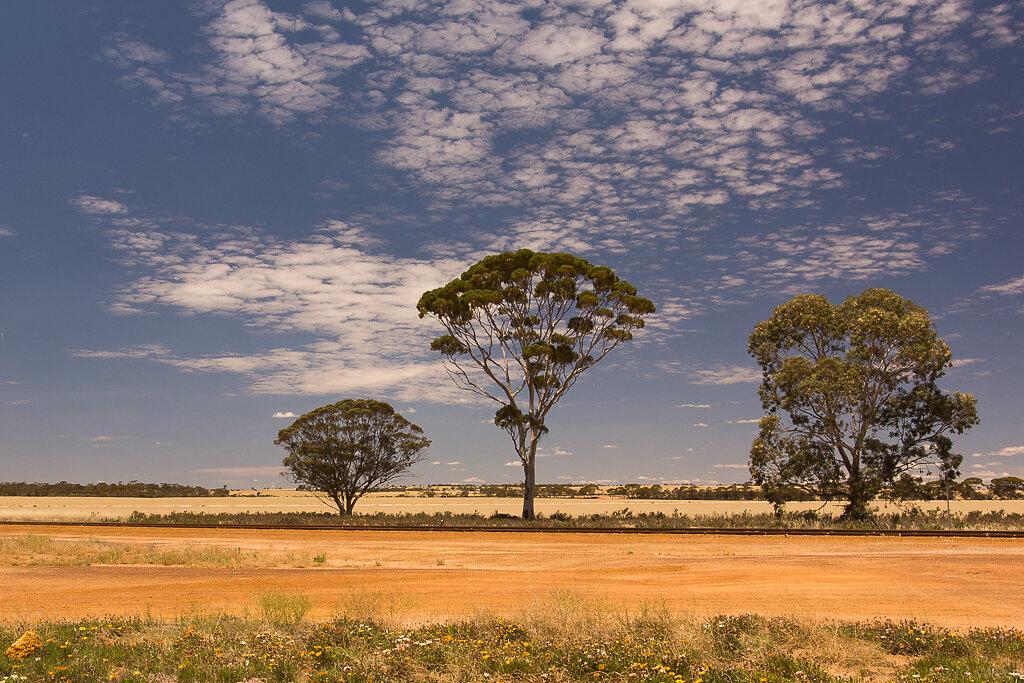141120-marc-wiese-DSC4567-2014-Australien-Urlaub.jpg